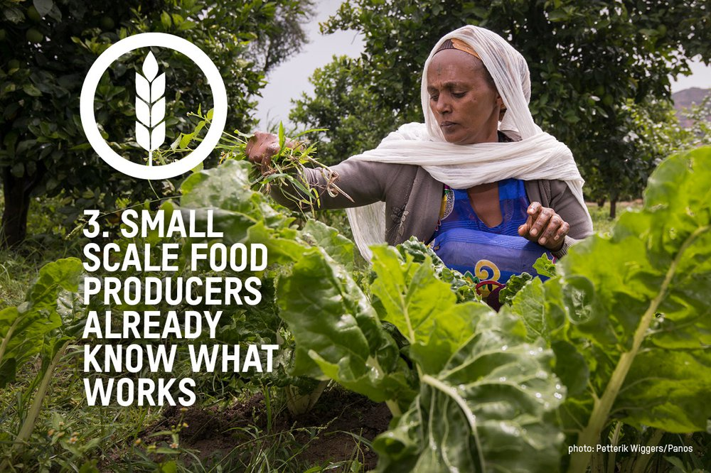 An image of farmer Birhan in a field of leafy greens with the words 'small scale food producers already know what works'
