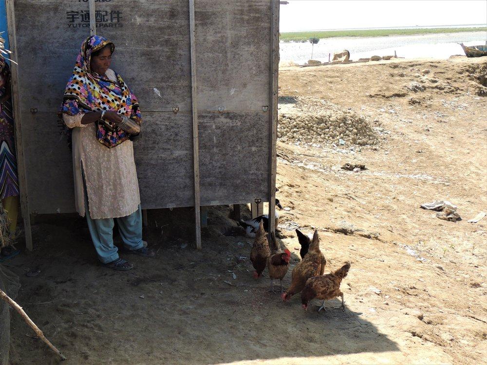 A picture of Bibi Dablo feeding chickens