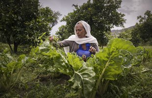 Birhan is a smallholder in Ethiopia and has benefitted from the Rural Resilience programme