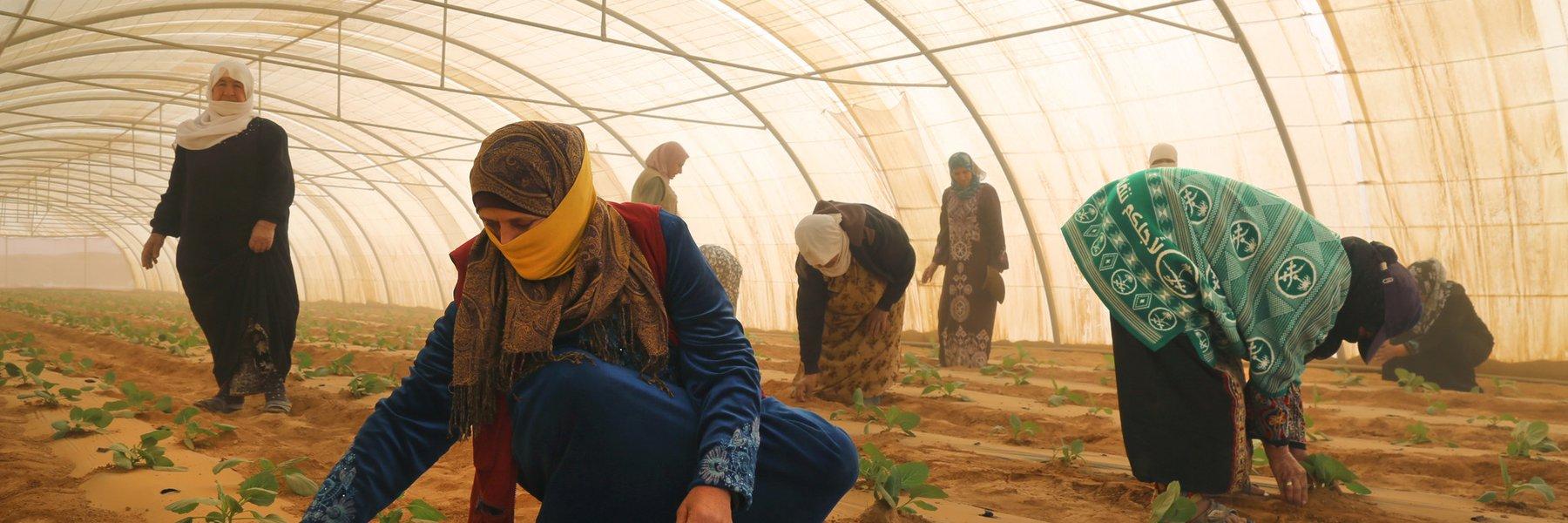 Greenhouses in Za'atari Camp