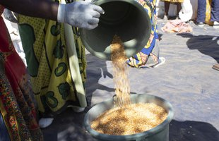 Split peas being poured into a bucket at a food distribution point