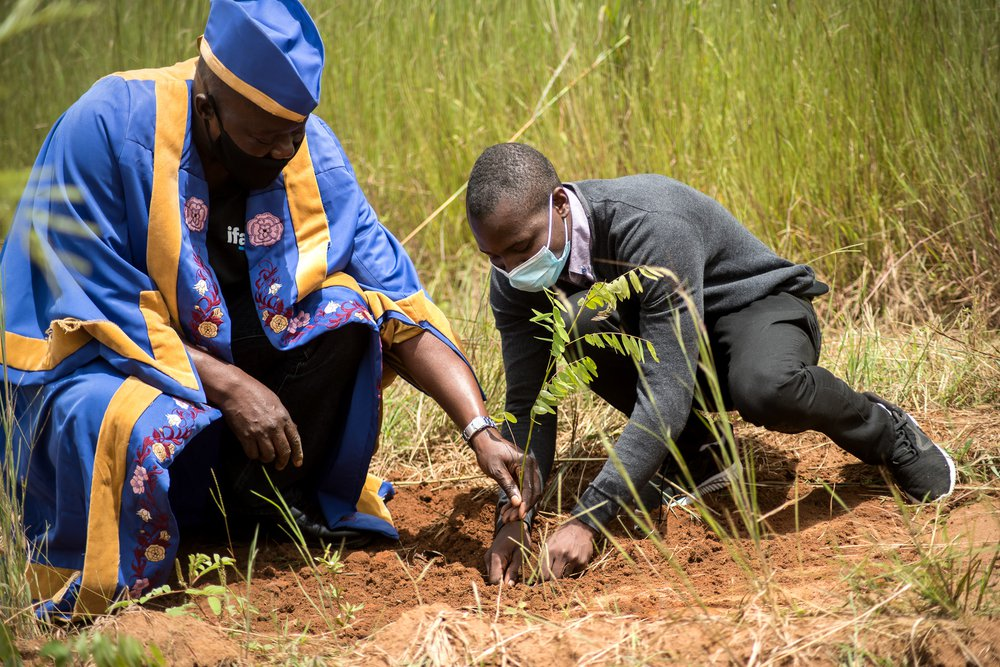 Issac, in smart casual city wear kneels to plant a very young tree in a hole in the red earth with a Senior Chief who wears a brilliant blue robe with yellow edges
