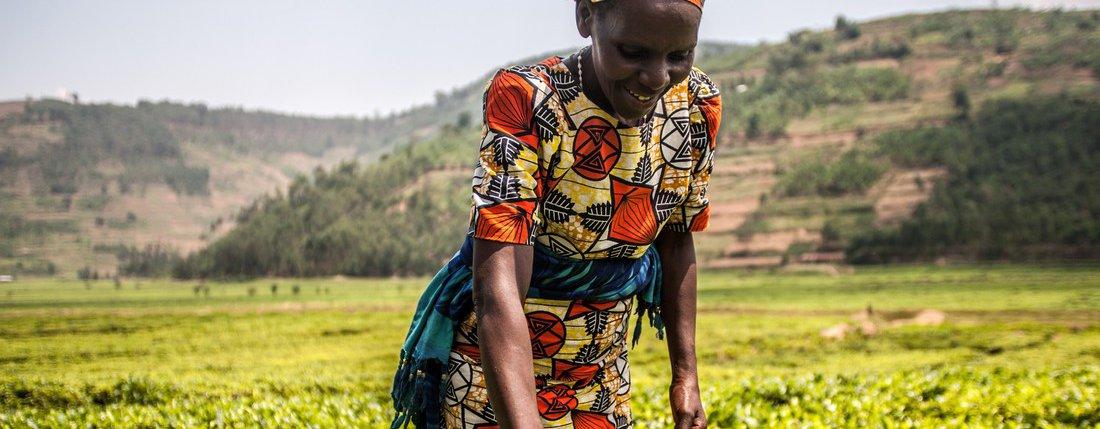 Virginie Mukagatare in her tea plantation in Rwanda.
